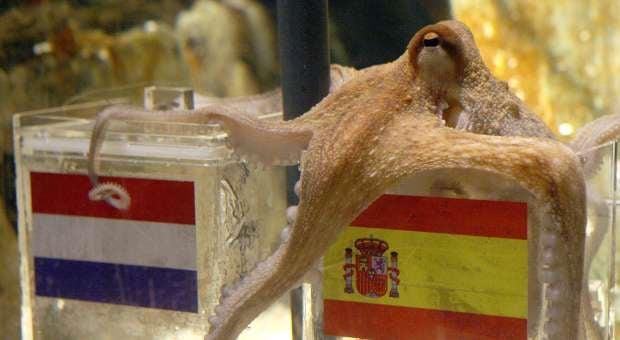 20100709--131000-octopus.jpg