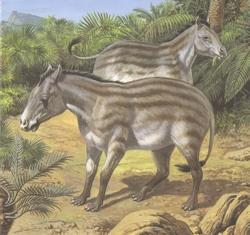 Hest Hyracotherium