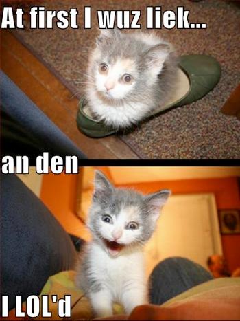 Lol cat funny