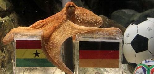 octopus-1.jpg