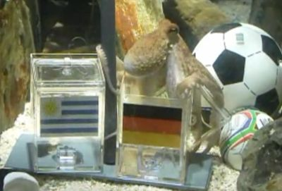 paul-the-octopus-predicts-german-victory-against-uruguay.jpg