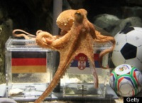 s-WORLD-CUP-OCTOPUS-PAUL-GERMANY-large.jpg